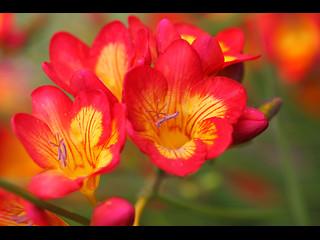 SakuraLive AOIxxQ NudeChat Cam