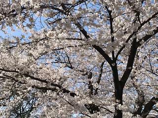 Yuuhi777(dxlive)プロフィール写真