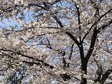 Yuuhi777ちゃん